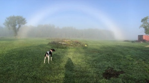 Archie in the rainbow. Photo by Nicole Siggs.