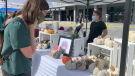 Shoppers checkout the items at 613flea at Lansdowne Park on Saturday. (Jackie Perez/CTV News Ottawa)