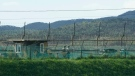 South Korean army soldiers patrol along the barbed-wire fence in Paju, South Korea, near the border with North Korea, Sunday, Sept. 26, 2021. (AP Photo/Ahn Young-joon)