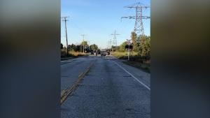 Pedestrian killed in collision near Cambridge