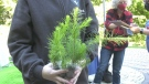 Ecology Ottawa is on track to giveaway 15,000 trees this year. (Shaun Vardon/CTV News Ottawa)