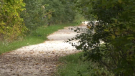 A trail in Collingwood, Ont., on Mon., Sept. 27, 2021 (Dave Erskine/CTV News)