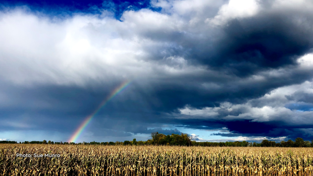 Chasing rainbows near Prescott, ON. (Sue Munro/CTV Viewer)
