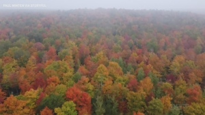 Drone footage captures fall colours in Wisconsin