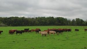 F2F: Elgin County