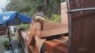 Sawatsky Sign-Off- Squirrel Bench
