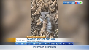 morning smile: camouflage for the win