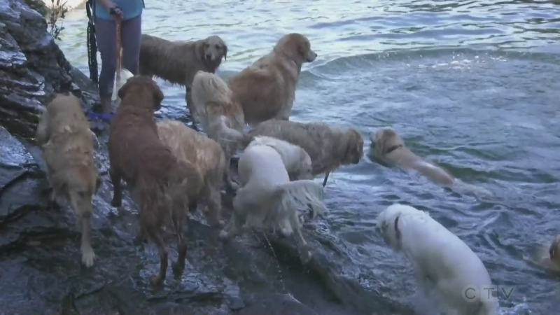 Sawatsky Sign-Off- Dog Day