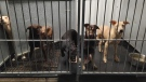 Several dogs rescued from a location in Brant County, Ont. (Cassia Bryden / Facebook)