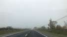 A foggy commute on County Road 10 in New Lowell on Thursday, Oct. 7, 2021 (Justin Rydell/CTV News)