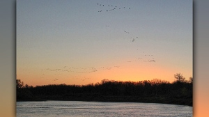 Canada geese flying over Assiniboine River. Photo by Allan Robertson.