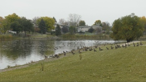 Residents of Winnipeg's Riverbend area are raising concerns over a retention pond creating a pungent smell. (Source: CTV News/Mason DePatie)