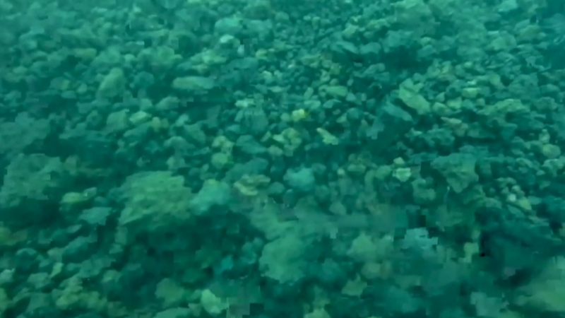 This underwater video shows how flowing lava from the Cumbre Vieja volcano formed a delta in the sea around Spain's La Palma island.