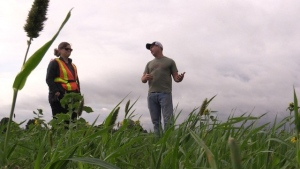 Hope Brock from Ausable Bayfield Conservation Authority and Brandon Coleman of Coleman Farms discuss cover crops near Kippen,Ont., Oct. 13, 2021. (Scott Miller / CTV News)