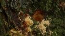 Jan Sedgewick discovered to trees on her Avalon property had holes drilled near the bottom, filled with a strange liquid. (Francois Biber/CTV Saskatoon)