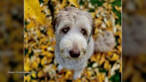 Strider enjoying fall. (Christine Béchard/CTV Viewer)