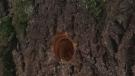 Tree hole mystery in Avalon neighbourhood