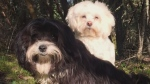 Dog reportedly fatally attacked by off-leash dogs