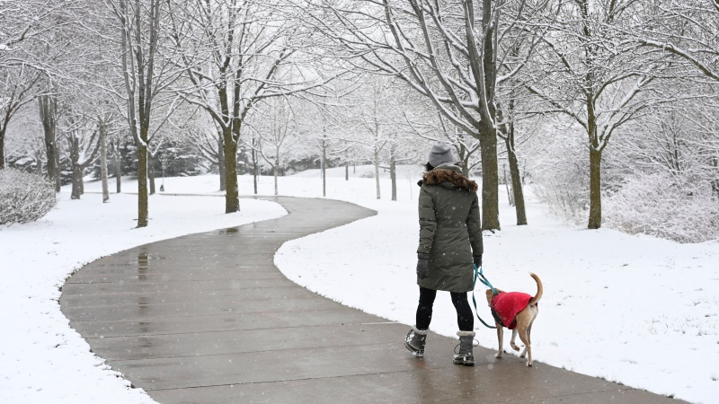 A woman walks a dog during a snowy day in Toronto, April 21, 2021. THE CANADIAN PRESS/Frank Gunn