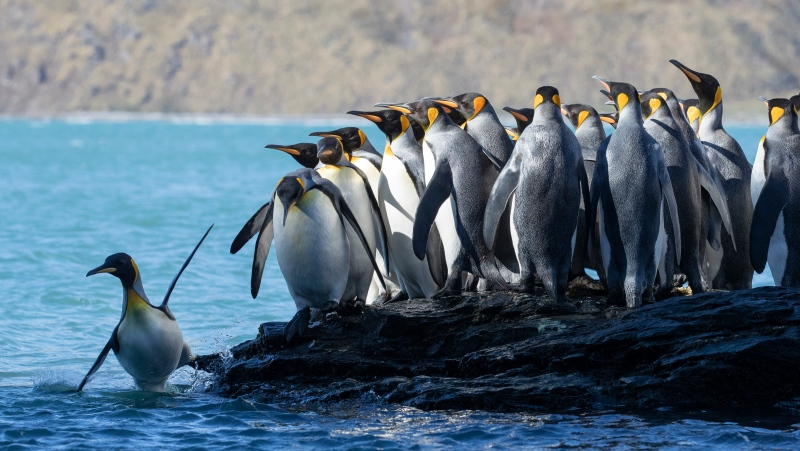 """Described as """"never-before-seen footage,"""" the film swims alongside seals, experiences the continent's vast penguin colonies and witnesses the largest congregation of fin and humpback whales ever filmed."""