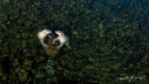 A picture from the photo series that won Martin Gregus the Rising Star Portfolio Award at the Natural History Museum's 2021 Wildlife Photographer of the Year competition. (Courtesy of Martin Gregus)
