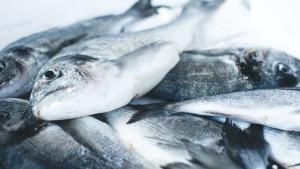 Stock image of a caught fish. (Unsplash, Jakub Kapusnak)