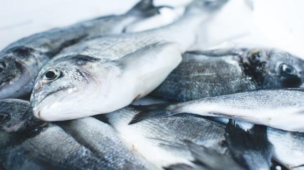 La demanda de mariscos se duplicará para 2050, según un estudio