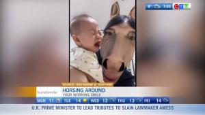 morning smile: horsing around