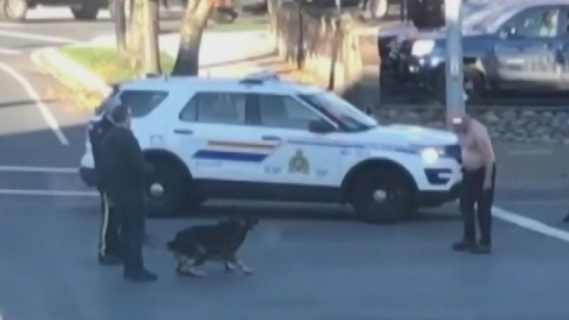 A video posted to Facebook shows the takedown near the intersection of the Trans-Canada Highway and Esplanade in Nanaimo.