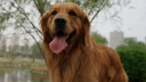 Call for answers after dog dies on airplane