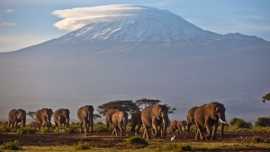 In this Monday, Dec. 17, 2012 file photo, a herd of adult and baby elephants walks in the dawn light as the highest mountain in Africa, Mount Kilimanjaro in Tanzania, sits topped with snow in the background, seen from Amboseli National Park in southern Kenya. Africa's rare glaciers will disappear in the next two decades because of climate change, a new report warned Tuesday, Oct. 19, 2021 amid sweeping forecasts of pain for the continent that contributes least to global warming but will suffer from it most. (AP Photo/Ben Curtis, File)