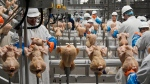 In this Dec. 12, 2019, file photo workers process chickens at a poultry plant, in Fremont, Neb. (AP Photo/Nati Harnik, File)