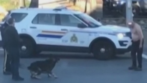 ideo of K9 taking down man in B.C. intersection
