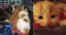 Kittens found in a dumpster in Hagersvill, Ont. on Monday, Oct. 18, 2021. (Source: @OPP_WR / Twitter)