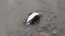 A dead bird is found on the shoreline in Wasaga Beach, Ont. (Supplied)