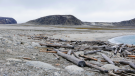 Driftwood on a Svalbard beach is pictured in this undated handout photo. Geoscientist Georgia Hole used tree rings to retrace the paths of driftwood, once frozen in sea ice, as it made its way through the Arctic. Photo Credit: Georgia Hale
