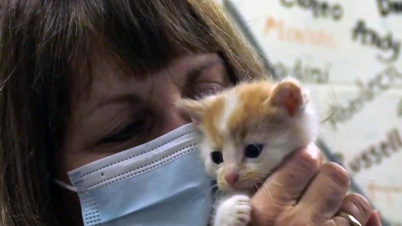 Kittens found in dumpster in Hagersville