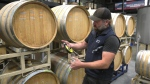 Winemaker Brent Rowland is pictured at Averill Creek Vineyard in the Cowichan Valley: (CTV News)