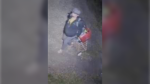Police say the image of the suspect was captured on surveillance video on Sept. 30, 2021 in Windsor, Ont.(Source: Windsor police)