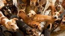 A group of dogs is shown in a file photo. (Getty Images)