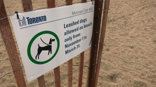 A municipal bylaw sign including a typo regarding leashed dogs on a Toronto beach is seen in this image. (CTV News Toronto/Natalie Johnson)