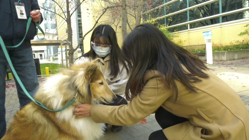 Two health care workers pet Candy at a pop-up pet therapy session. Oct. 20, 2021. (CTV News Edmonton)