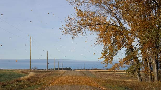 Falling leaves from the cottonwood trees. Photo by Barb Alston.