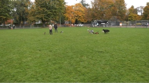 Dogs and their owners in Victoria's Pemberton Park on Oct. 20, 2021. (CTV News)