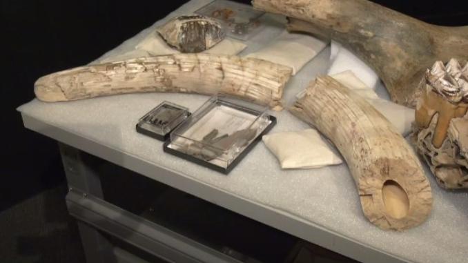 Bones of Mastodon