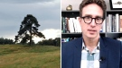 Dan Riskin on how trees are stepping up on CO2