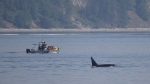 An image sent to the DFO of the incident is shown: (Fisheries and Oceans Canada)