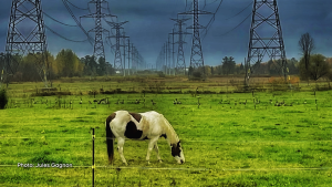 This horse was sharing a field with a flock of Canada geese looking on as the rain clouds were coming in by the Lower Saxony equestrian facility in Cumberland. (Jules Gagnon/CTV Viewer)