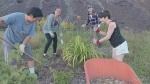 Effort to create edible forest garden in Sudbury