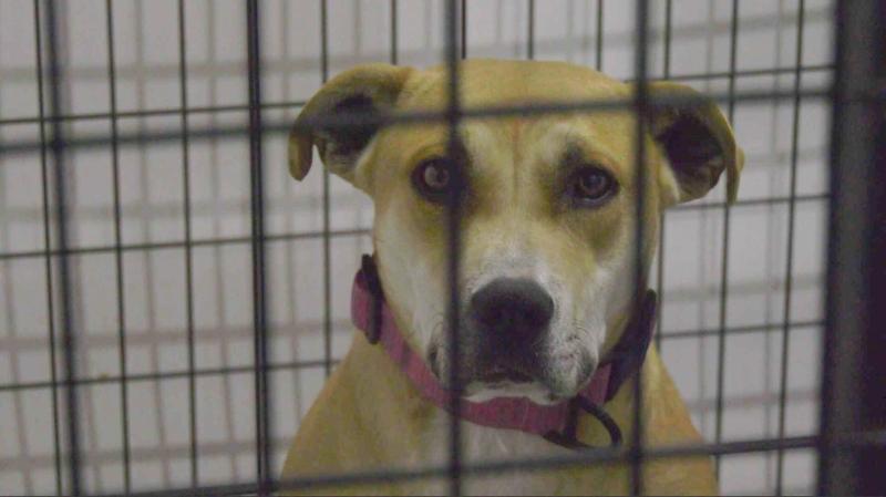 A dog at the Saving Grace Animal Society shelter in Alix, Alta. (Nav Sangha/CTV News Red Deer).